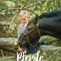Pferde_stärken